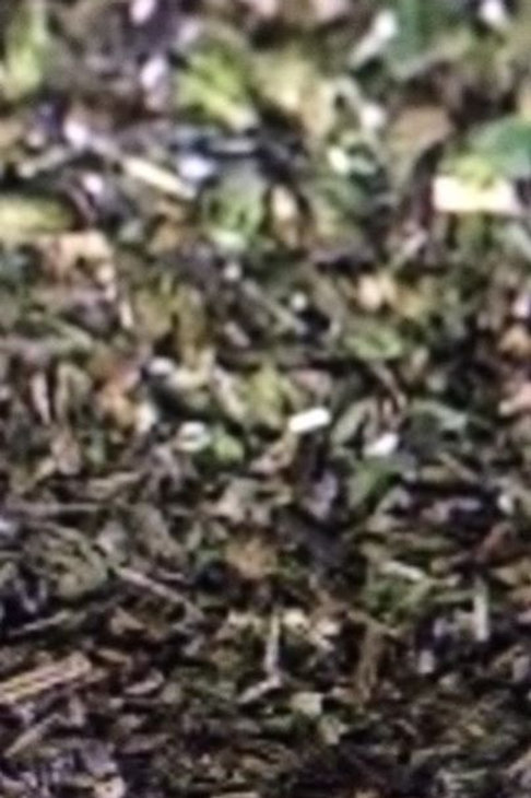Organic Peppermint Loose Herb