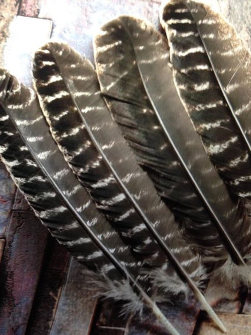 My Healing Feathers