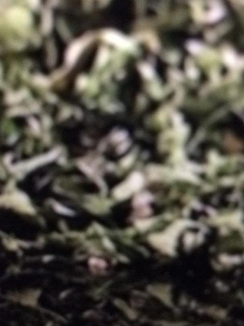 Organic Basil Herb