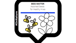 The Buzz About Bees (and why it matters)