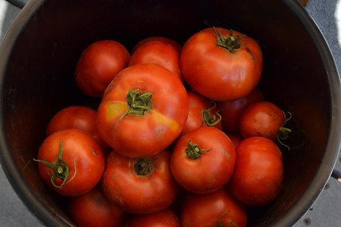 Sasha's Altai slicing tomato