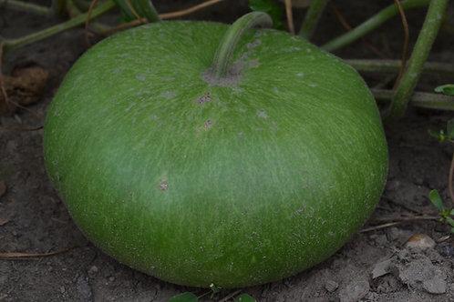 Canteen gourd