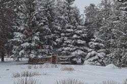 Secret garden in snow