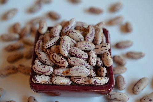 Harmony dry bush bean
