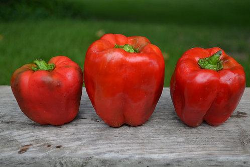 King Crimson sweet pepper