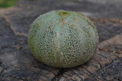 American Melon (A Chair Verte)
