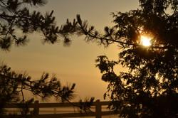 Sun through the cedars