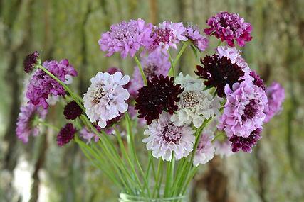 scabiosa mix flower bundle.JPG