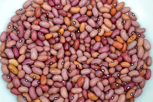 Coral dry pole bean