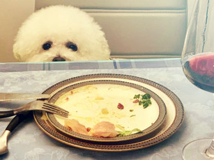 05_Bruno is starving_R1.jpg