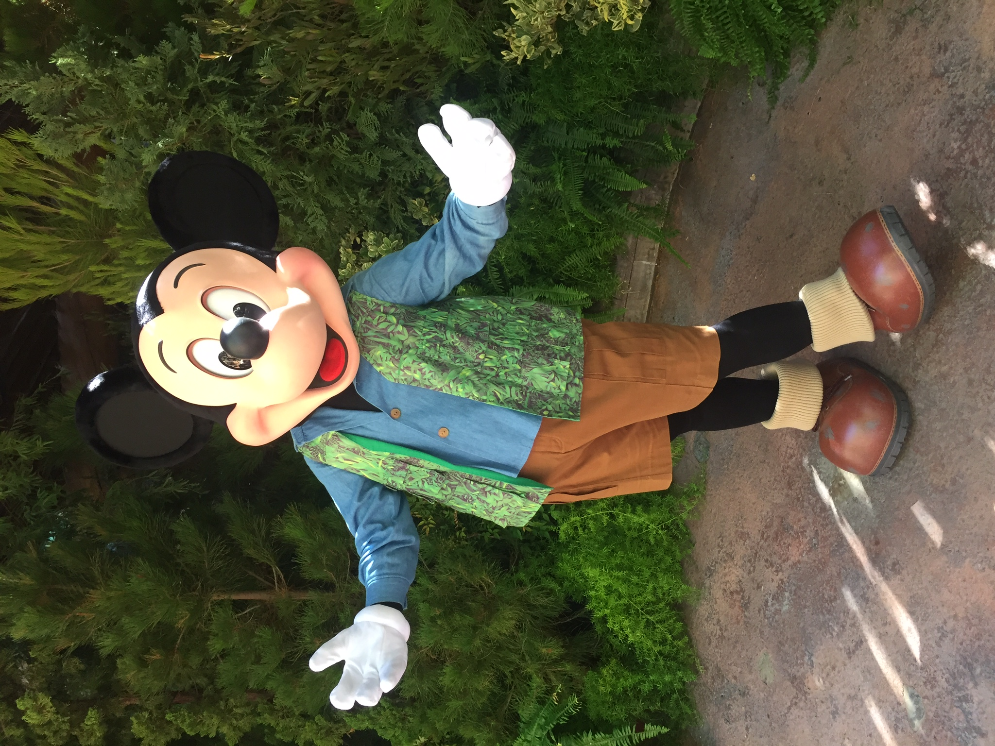 Forest Mickey