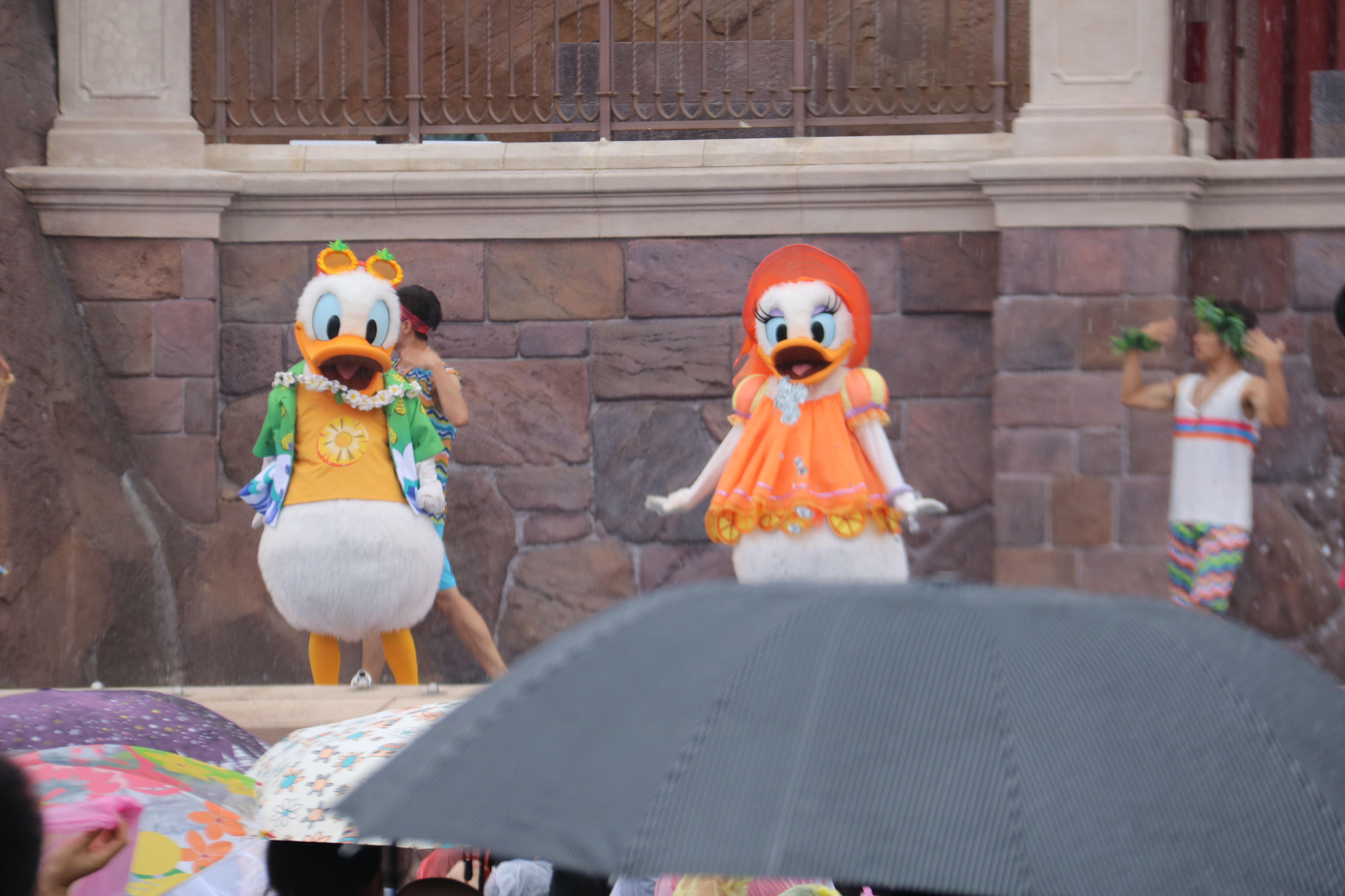 Opening Donald and Daisy