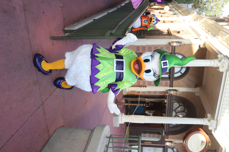 New Parade Daisy