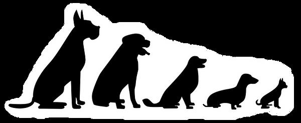 Mobile dog groomer, Brighton Melbourne