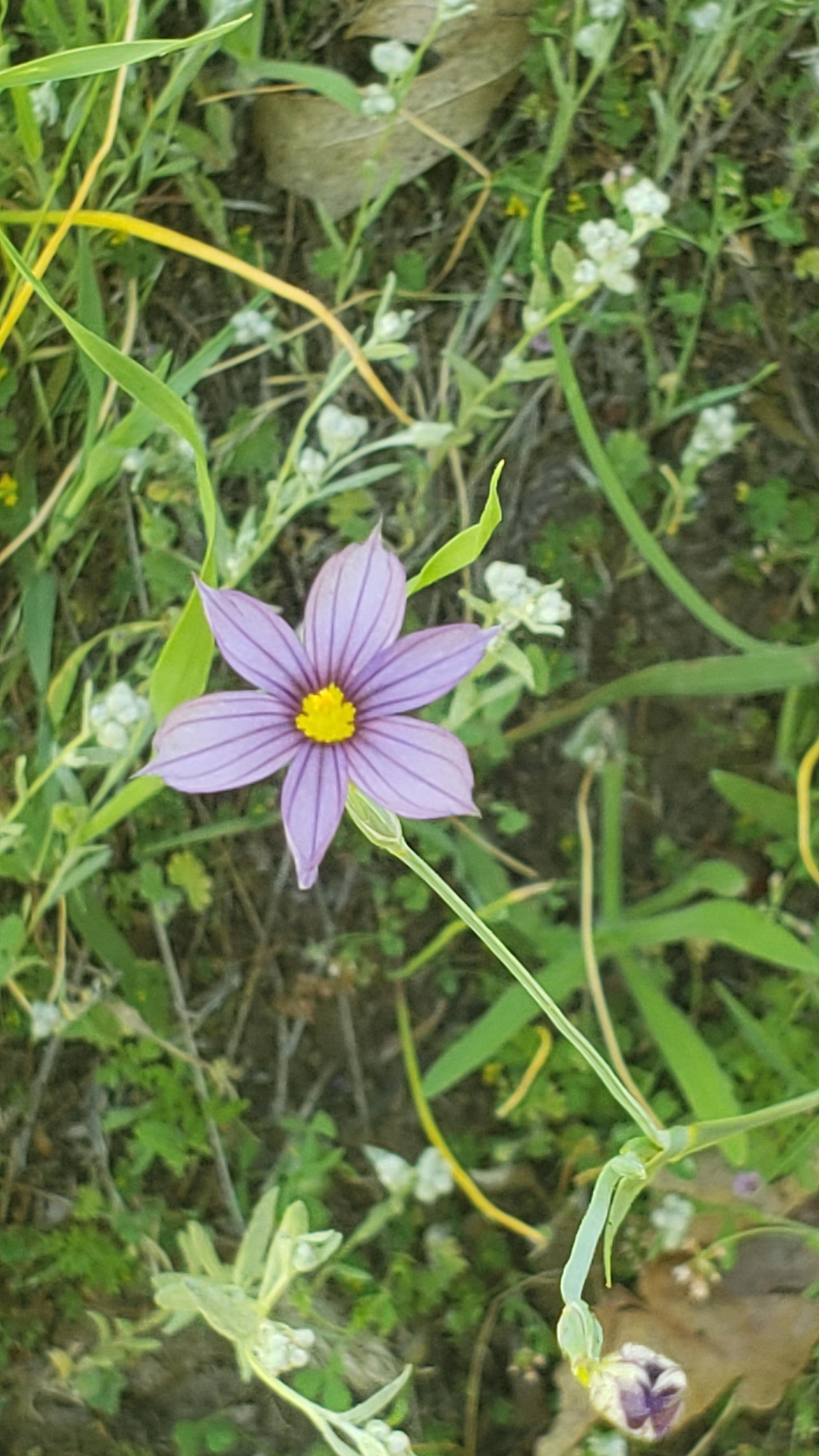 Wildflower Walk -- kids 12 - 18