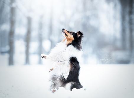 5 anti-verveel tips voor (honden-)fotografen tijdens de Corona crisis