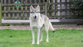 Meet Reign, the Northern Inuit