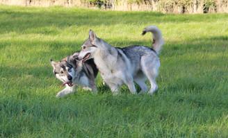 Korra and Theia