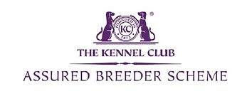 Fireborn are in the UK Kennel Club Assured Breeders scheme