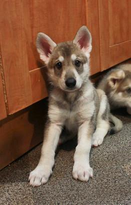 Flo and Deimos puppy