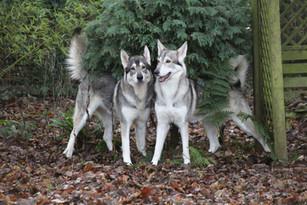 Theia and Korra