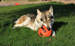Deimos and his toy