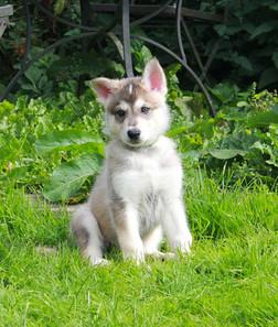 Belle and Deimos puppy
