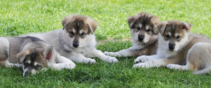 Theia and Finn Puppies