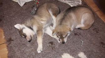 Northern Inuit siblings