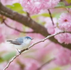 Spring Forward With a Detox!