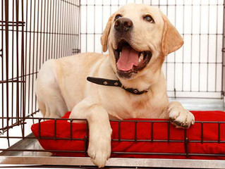Crate Training: To use or not to use