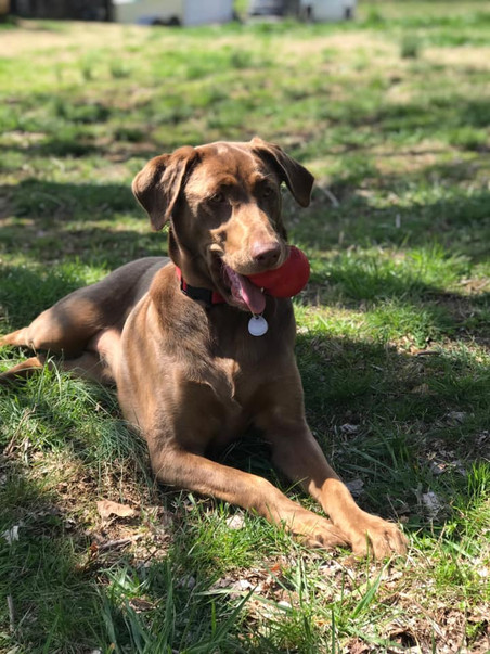 Puppies For Sale Auburn Al