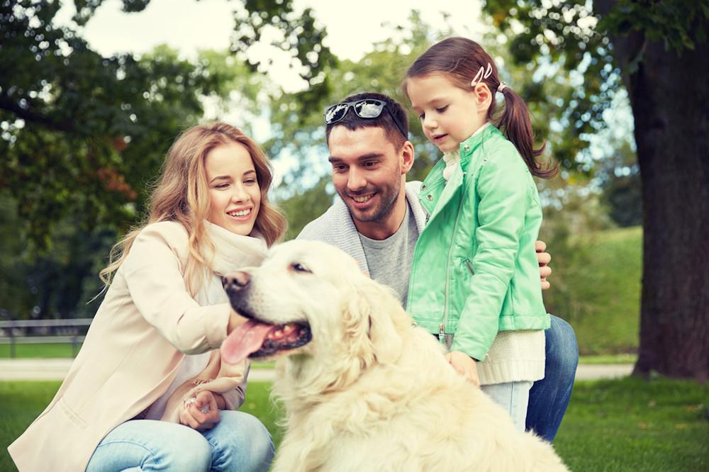 British Lab Puppies For Sale in Florida