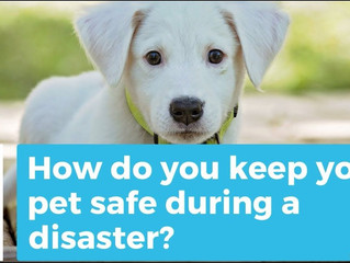Is Your Pet Prepared for a Disaster!