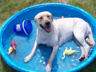 Help your pooch make the most out of summer