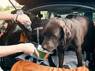 The Biggest Summer Danger to your dog; Dehydration