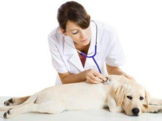 Choosing the right Veterinarian