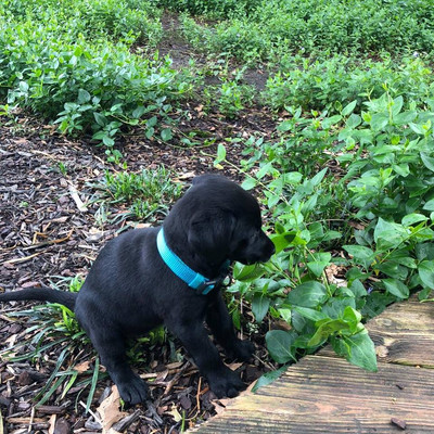 Puppies For Sale In Dothan Al