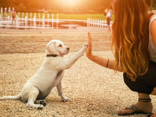 A few Major Training Tips:                          To successfully Engage with your puppy!