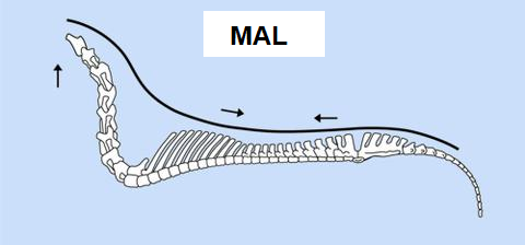 MAL.png