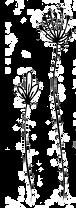 little flowers transparent.png