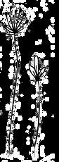little%20flowers%20transparent_edited.pn