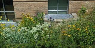 Native Plants Around Campus