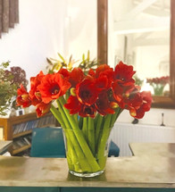 Bouquet%20d'Amaryllis_edited.jpg