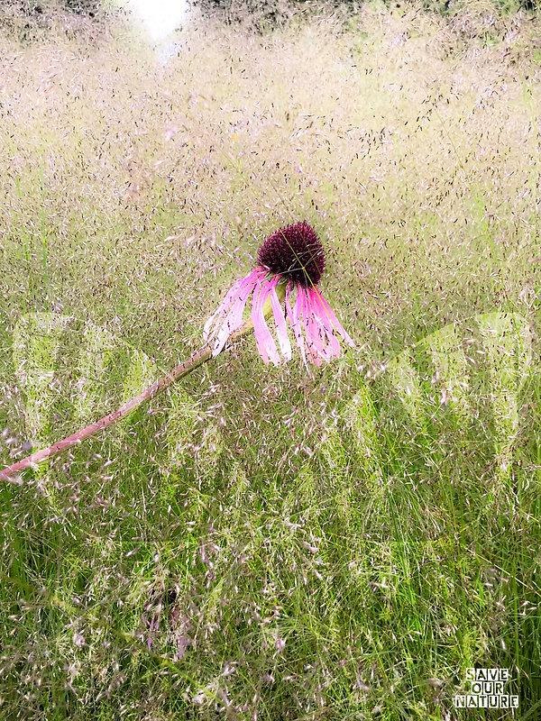 son_bloem_vlinder.jpg