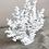 Thumbnail: Resin Lace Coral