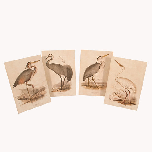 Wooden Bird Prints