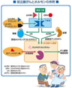 ブルークロバー・キャンペーン 前立腺がん 早期発見 適切治療