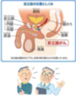 前立腺がん 位置 ブルークロバー・キャンペーン 前立腺がん 早期発見 適切治療,前立腺の働き
