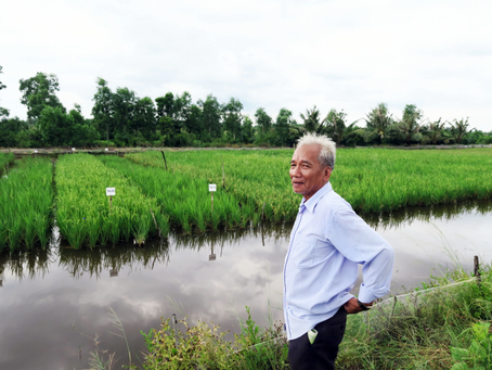 Adapting to rising salinity in the Mekong Delta